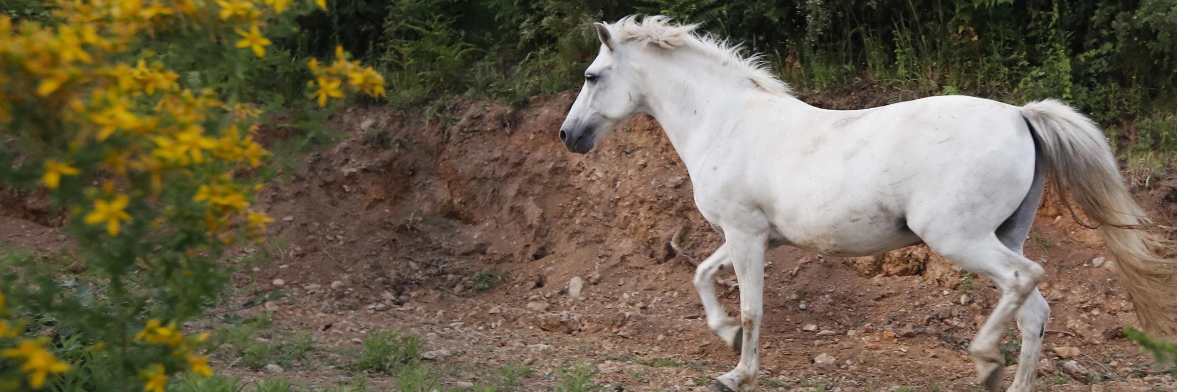 Cavallo presso Camera e Colazione a Martirano Lombardo Calabria